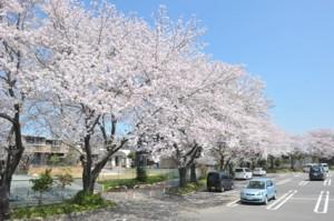 桜の季節にはユウベルホテルで
