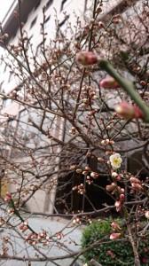 #春はそこまで来てます
