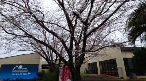 #「春分の日」ようやく春です